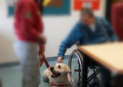 Stefania cassia addestramento cani