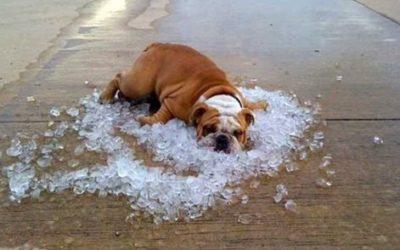 Come abbassare la temperatura corporea del cane dopo un intenso allenamento?