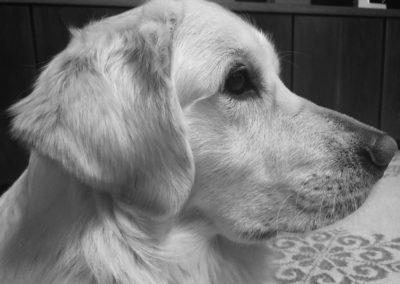 mon cane addestrato monza brianza