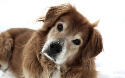 Casa di Riposo per cani anziani